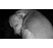 Sweet Dreams my Beautiful Puppy Photographic Print