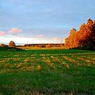 Fall on field by loiteke