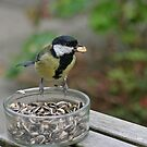 Great Tit by Robert Abraham