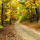 Golden Autumn Road by NatureGreeting Cards ccwri