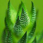 Fade to Green.  by Sherstin Schwartz