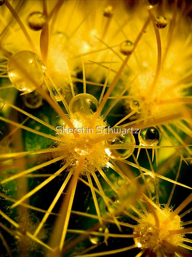 Needles by Sherstin Schwartz