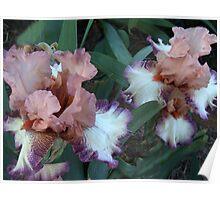 Iris 13 Poster