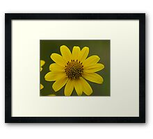 Dwarf Sunflower Framed Print