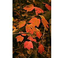 Fall Forest Floor Photographic Print