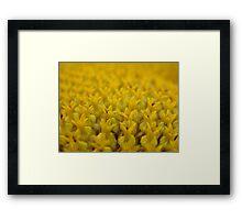 Sunflower Detail Framed Print