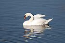 The Epitomy of Grace - Mute Swan by Lynda  McDonald