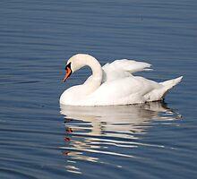 The Epitomy of Grace - Mute Swan by Lynda   McDonald