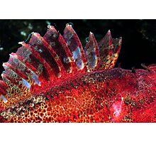 Fish Scape Photographic Print