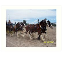 Clydesdales at the Parker Show Art Print