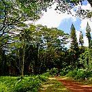 Manoa Falls Trailhead by kevin smith  skystudiohawaii