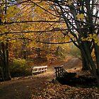 Autumn Lane by madmac57