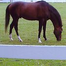 Cigar out Grazing by HungarianGypsy
