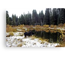 Buddy Asks Genie of the Creek How he likes the Snow Canvas Print