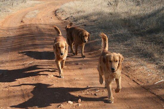 On The Run by Cheyenne