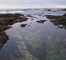 Tide Pools by Laurie Puglia
