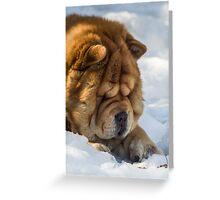 Chow-Chow watchdog Greeting Card