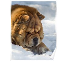 Chow-Chow watchdog Poster