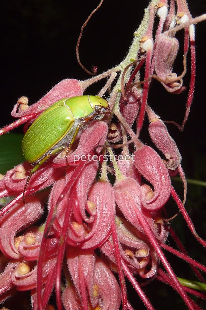 Green Christmas Beetle by peterstreet