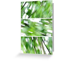 The wind in the Birch Greeting Card