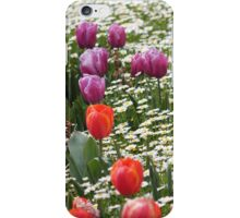 Field of Tulips and Daisies - Canberra Floriade iPhone Case/Skin