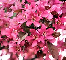 Blossoms Pretty In Pink by SmilinEyes