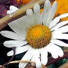 Autumn Daisy by Charlotte Hertler