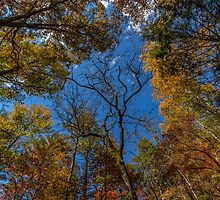 Dreaming in Smithgall Woods (I) by Bernd F. Laeschke