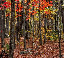 Fort Mountain State Park: Cool Springs Overlook Area by Bernd F. Laeschke