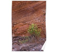 rabbit brush against canyon wall Poster