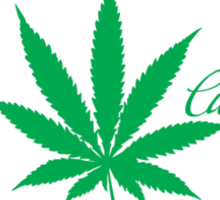 Cannabis Logorythm Sticker