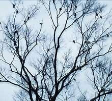 Blackbirds In A Tree by Gillwho