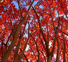 Crimson Canopy by M. Huston