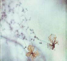 Delicate by AngelaFanton