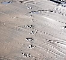 Gull Prints in the Sand by Carol Barona