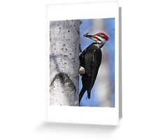 Male Pileated Woodpecker - Ottawa, Ontario Greeting Card