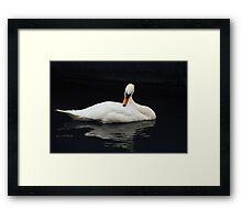 Swan V Framed Print