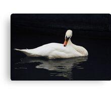 Swan V Canvas Print