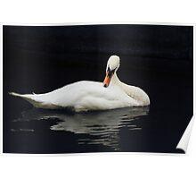 Swan V Poster
