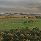 Barossa Valley by FASImages
