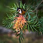Eastern Spinebill by Gianatti6x7
