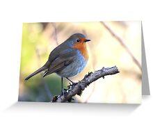European Robin - Erithacus Rubecula - Robin Red Breast Greeting Card