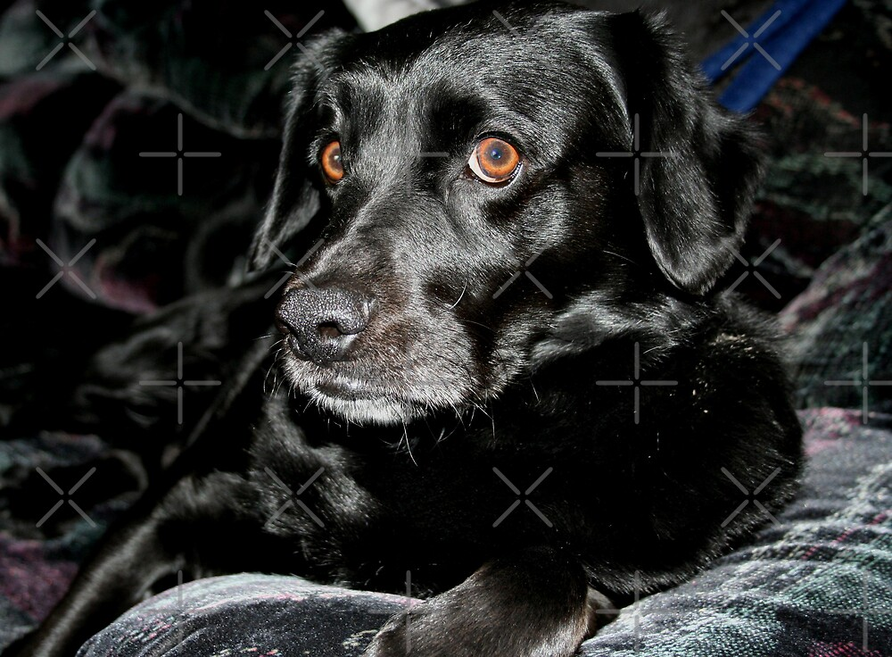 In Memory of Sampson by Vickie Emms