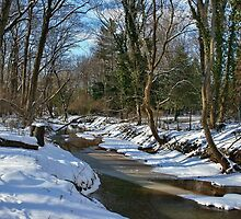 Winter Woods by Lanis Rossi