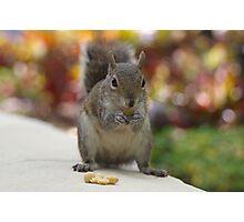 squirrel grabbing peanuts Photographic Print