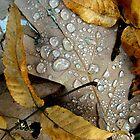 Raindrops on Oak Leaf by Linda Marlowe