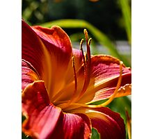 Flower of Fire Photographic Print