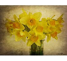 Spring Delight Photographic Print