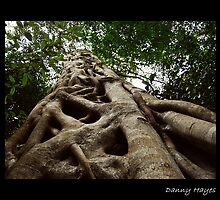 KNOTTED NATURE strangler fig (Ficus sp.) by DANNY HAYES