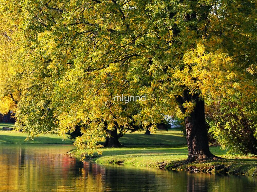 PARK TREE ORTON by mlynnd